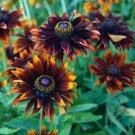 KIMIZA - NEW! 30+ RUDBECKIA MORENO FLOWER SEEDS