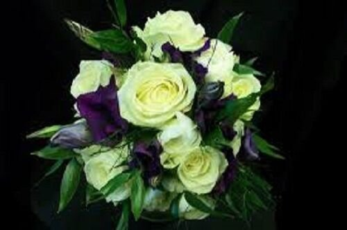 KIMIZA - 20+ YELLOW AND PURPLE LISIANTHUS FLOWER SEEDS MIX / ANNUAL