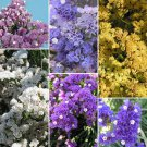 KIMIZA - 50+ STATICE PASTEL SHADES FLOWER SEEDS MIX / Long Last ANNUAL / DEER RESISTANT
