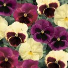 KIMIZA - NEW! 35+ PANSY DELTA APPLE CIDER FLOWER SEEDS MIX / ANNUAL