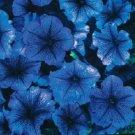 KIMIZA - 30+ PETUNIA MULTIFLORA NORA FLOWER SEEDS / ANNUAL / SKY BLUE W/PURPLE VEIN