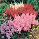 KIMIZA - 25+ ASTILBE MIX FLOWER SEEDS / PERENNAL