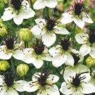 KIMIZA - 50+ NIGELLA LOVE IN THE MIST WHITE MISS JEKYLL FLOWER SEEDS / RESEEDING ANNUAL