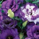 KIMIZA - 20+ LISIANTHUS PURPLE AND PURPLE PICOTEE FLOWER SEEDS MIX / LONG LASTIN ANNUAL