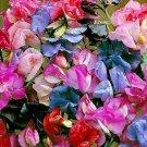 KIMIZA - 50+ LATHYRUS MOST FRAGRANT MIX SWEET PEA FLOWER SEEDS / RESEEDING ANNUAL