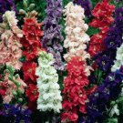 KIMIZA - 40+ GIANT LARKSPUR IMPERIAL MIX FLOWER SEEDS / EARLY BLOOMING PERENNIAL