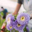 KIMIZA - 100 FRESH SEEDS GARLAND DAISY FLOWERS