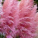 KIMIZA - PINK PAMPAS GRASS SEEDS, HEIRLOOM ORNAMENTAL GRASS SEEDS, FEATHERY BLOOMS 50ct