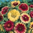 GAILLARDIA MONARCH MIX FLOWER 30 SEEDS