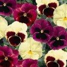PANSY DELTA APPLE CIDER FLOWER 35 SEEDS