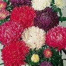 ASTER MILADY CUT FLOWER ASSORTMENT FLOWER 30 SEED MIX