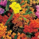 BUTTERFLY WEED FLOWER 30 SEEDS MIX