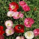 POPPY SHRILEY SINGLE MIX 380 Seeds