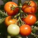 TOMATO CASCADE EARLY 15 Seeds