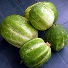 CUCUMBER Richmond Green Apple 15 Seeds