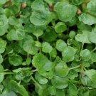 Cress AQUA LARGE LEAF 150 Seeds