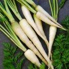 Carrot LUNAR WHITE 50 Seeds