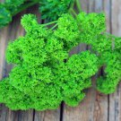 PARSLEY Moss Curled 100 Seeds
