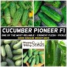 CUCUMBER Pioneer F1 10 Seeds