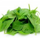 BABY SPINACH 50 Seeds
