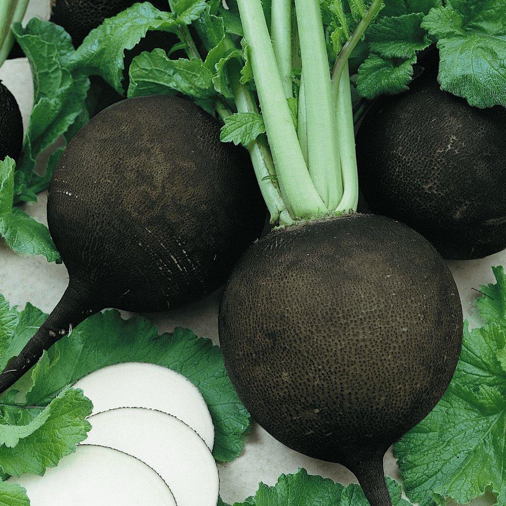 Radish BLACK SPANISH ROUND 50 Seeds