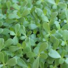 PURSLANE GREEN 100 Seeds