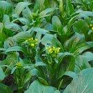 CHOI SUM 100 Seeds