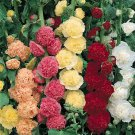 HOLLYHOCK Chaters Double Mixed 20 Seeds