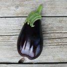 EGGPLANT Black Beauty 15 Seeds