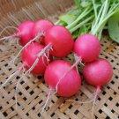 Radish PINK BEAUTY 50 Seeds
