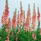 Light Pink Foxglove 50 Seeds