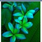 Blue Green Plumeria 5 Seeds