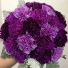 Purple Mix Carnation 100 Seeds
