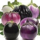 Eggplant Aubergine Round Mix 20 Seeds