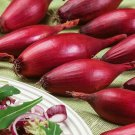 Shallot Onion Banana Red Long 300 Seeds