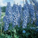 Light Blue Delphinium Seeds
