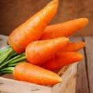 Carrot Karotel Orange 2000 Seeds