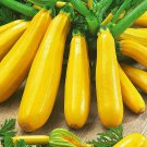 Zucchini Courgette Squash Yellow 30 Seeds