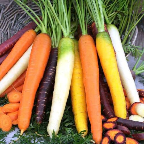 Carrot Light Rainbow Mix 2000 Seeds