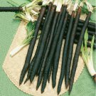 Black Root Salsify Scorzonera Medicinal 200 Seeds