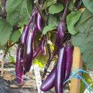 Chinese Eggplant 100 Seeds