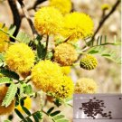 Acacia Farnesiana Vachellia Perfumed Wattle 10 Seeds