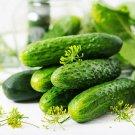 Cucumber 100 Seeds