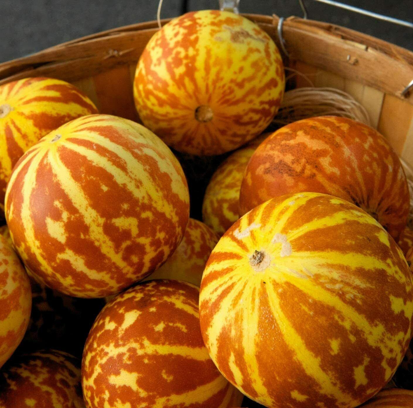 Rare Tigger Melon 20 Seeds