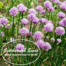 SCARBOROUGH SEEDS 500 SEEDS