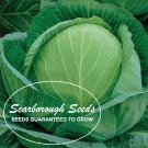 SCARBOROUGH SEEDS Golden Acre Cabbage 500 Seeds