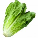 Lettuce 1200 Seeds
