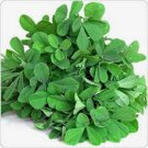 FENUGREEK, HERB 100 SEEDS