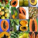 PAPAYA FRUIT MIX 25 Seeds