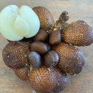 Zalacca Salaka salak pondoh 8 Seeds
